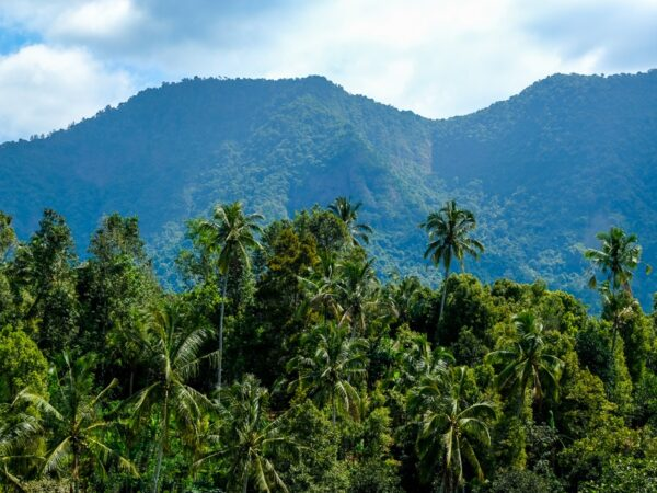 Mountains and jungle palm trees in north Bali