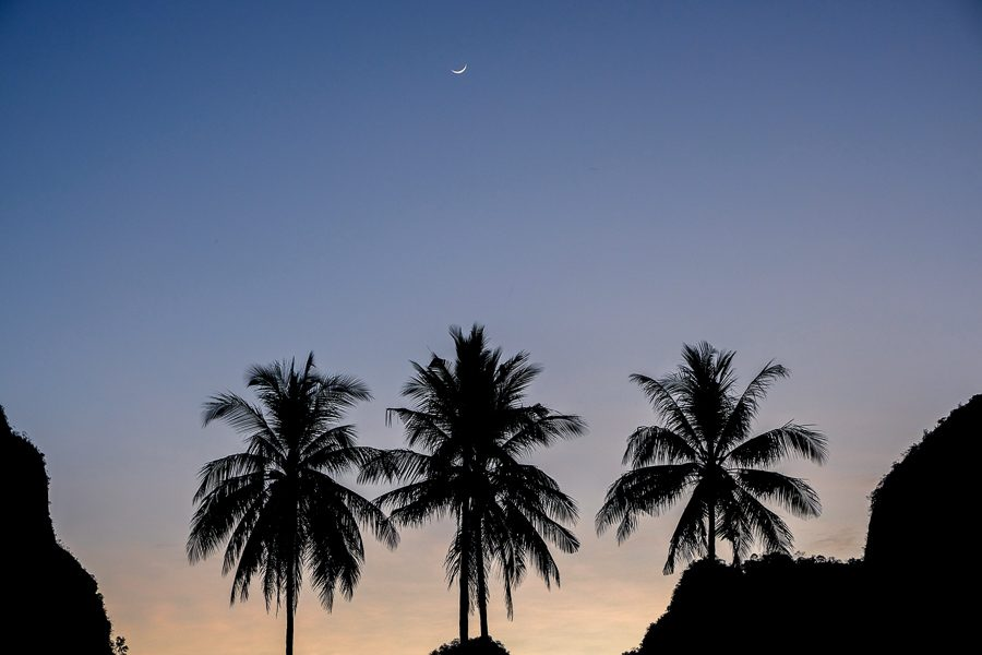 Palm trees and moon before the sunrise at Rammang Rammang Maros in Sulawesi