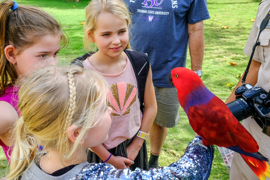 Little kids holding a colorful red parrot at the Bali Zoo