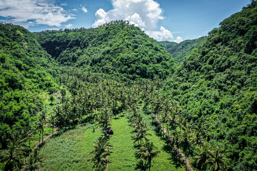 Drone picture of palm trees and hills at Atuh Beach in Nusa Penida, Bali