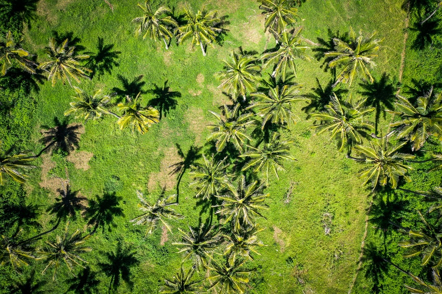 Palm tree forest at Atuh Beach in Nusa Penida, Bali