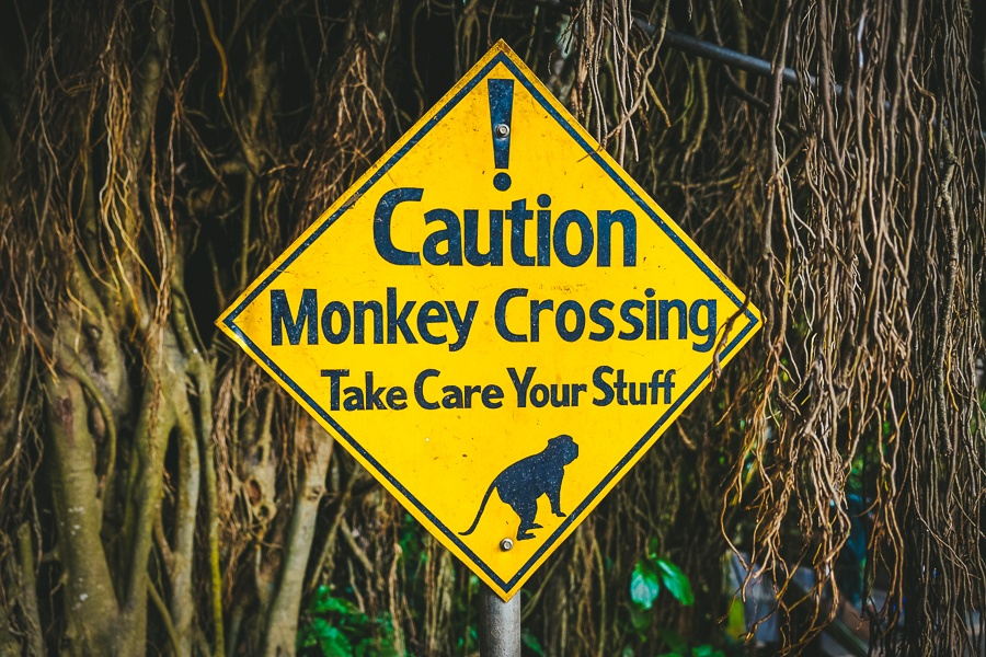 Monkey crossing caution sign at the Ubud Monkey Forest in Bali