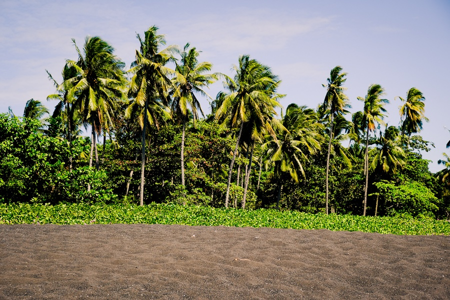 Palm trees on a black sand beach at the Tangkoko Nature Reserve in Sulawesi, Indonesia
