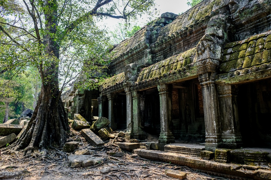 Windows at the Ta Prohm Temple Ruins in Angkor Wat, Cambodia
