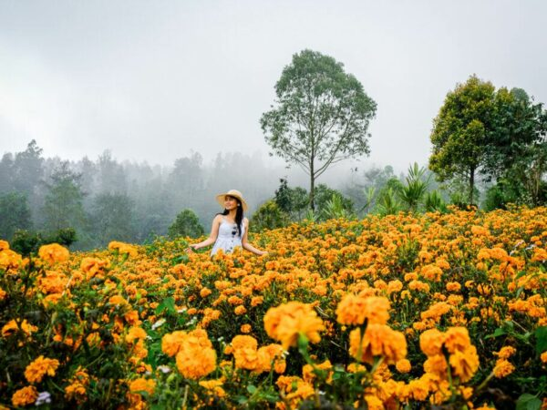 My woman at the marigold fields in Bali
