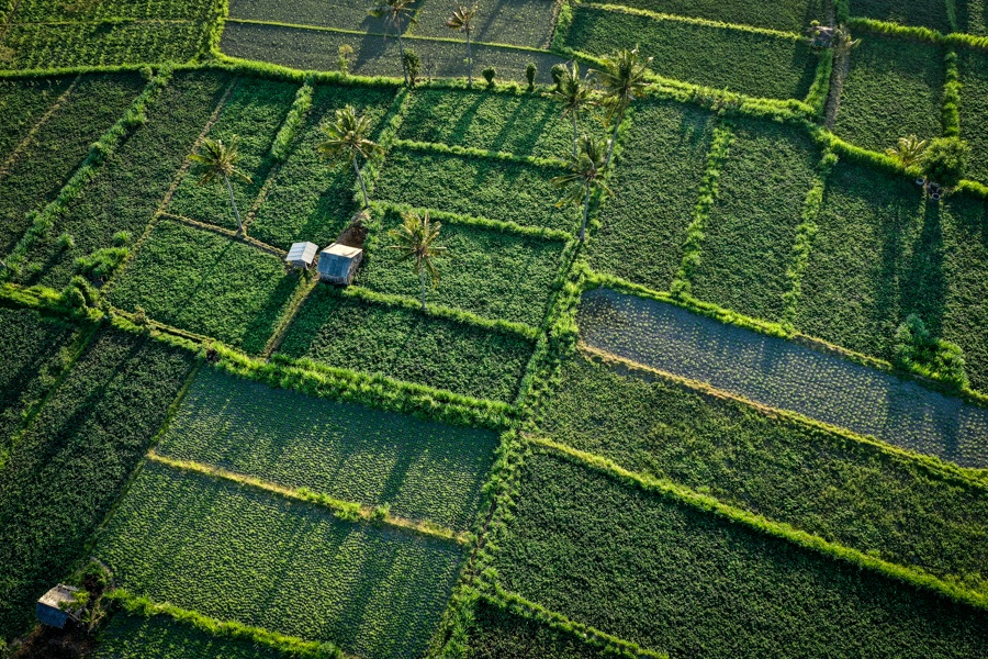Drone view of Amed rice fields in Bali