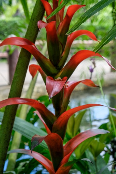 Red jungle plant