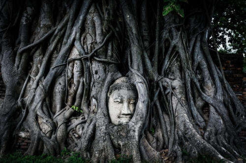 Buddha face surrounded by tree roots